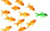 Chi sono i Social Influencer e perché sono importanti